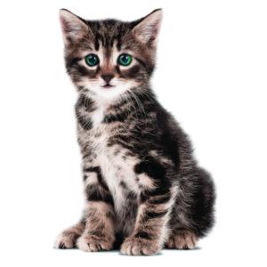 Kek muursticker kitten zoë