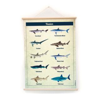 Wandplaat Haaien decoratie kinderkamer babykamer