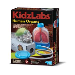 Menselijke Organen KidzLabs