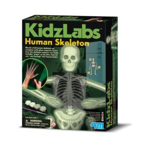 Menselijk Skelet Lichtgevend 5603375