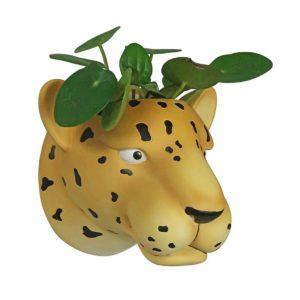 luipaard bloempot online